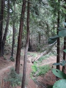BigSurTrees